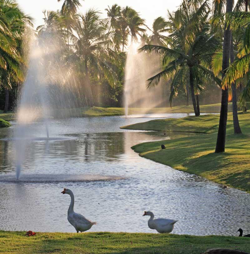 lagos-patos-natureza